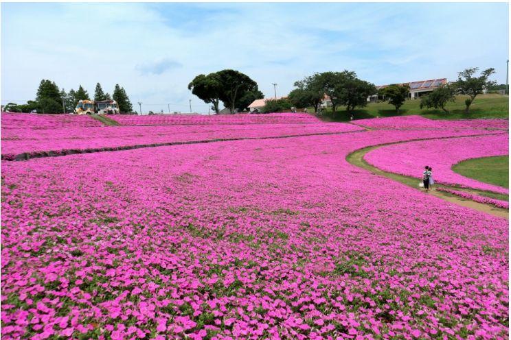 美丽如画的日本